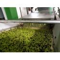 Huile d'olive 25cl (3ème année de conversion Bio)