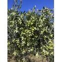 Huile d'olive 3 litre Bio